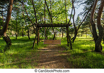 Wooden swing in a grove of evergreen trees