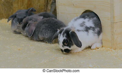 Group of rabbits sitting near white wooden fence in contact...