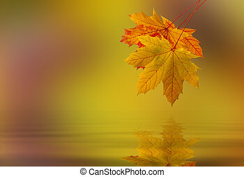 Leaf fallen on the water - Leaf fallen from a tree in the...