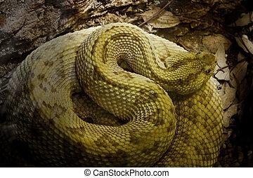 Viper - Snake