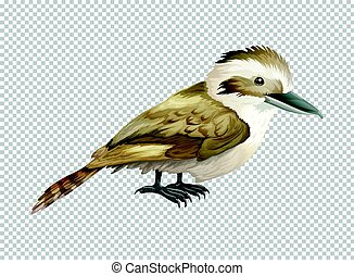 Kookaburra bird on transparent background illustration