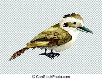 Kookaburra bird on transparent background illustration