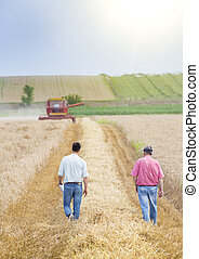 Farmers in wheat field during harvest - Two farmers walking...