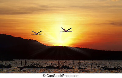 Flamingos flying in the sunset over the beautiful Lake...