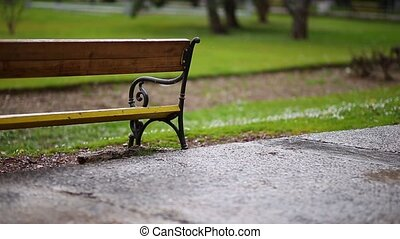 Bench in the park. Metal wrought-iron bench with a wooden...