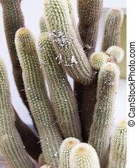 detail of a succulent plant