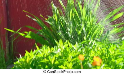 Watering of flower beds - Watering garden flowers and plants...