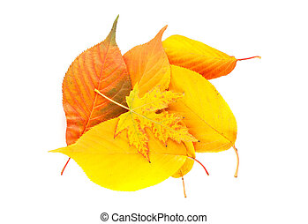 Fallen leaves - Colorful fallen autumn leaves isolated on...