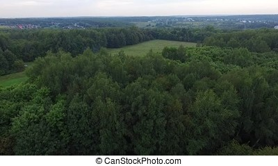 Forest in sunny day. Aerial view on thicket of the forest HD