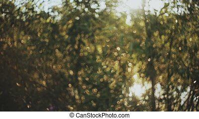 Beautiful nature landscape in the forest at spring. Sun rays shining through the leaves, foliage.