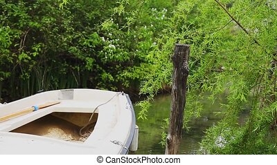 Wooden boat with oars moored under a willow tree.