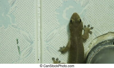 Gecko sits on a tiled wall in the bathroom.