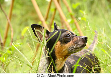 dog standing in grass field and focus something outdoors on...