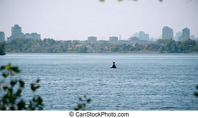 Tern flies over water of Dnieper river with view of Kyiv -...