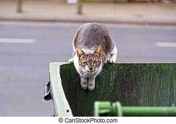 Homeless cat seeking food in a garbage bin, looking at the...