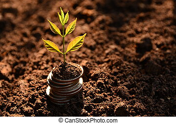 Concept of money tree growing from money. Financial and saving concept.
