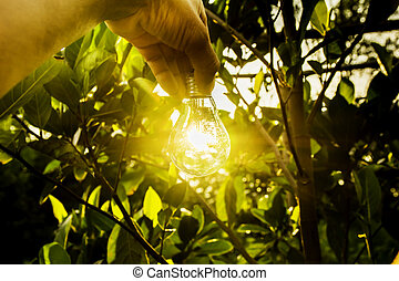 Hand of person holding light bulb for idea for success or solar energy