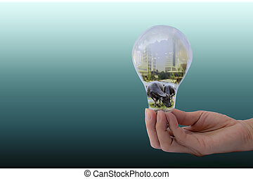 Hand of person holding light bulb for idea and buffalo in bulb