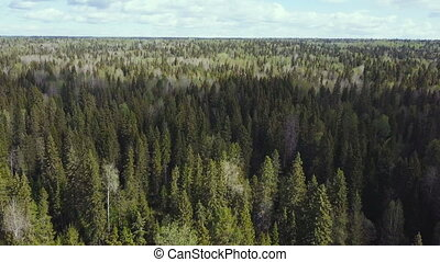 Aerial survey of forest. Top view