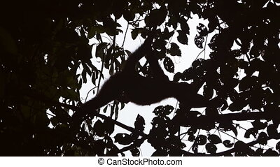 Monkey shadow through the tree leafs - Closeup long shot of...