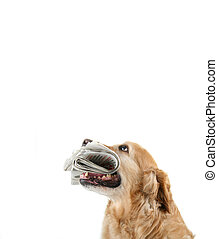 dog with newspaper on white background