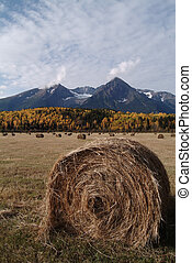 Hayfield with round bales in the Bulkley Valley BC, Canada.