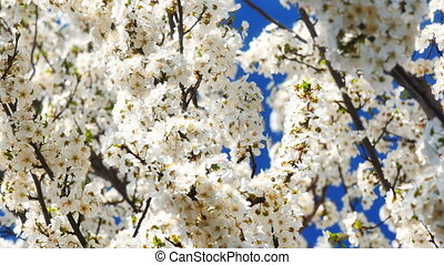 Spring blossom tree with flowers 4k