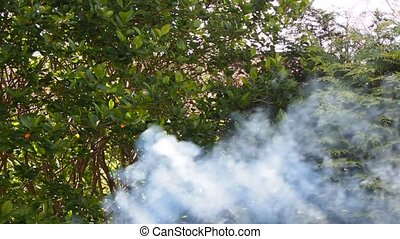Lots of gray smoke from grill into lush foliage - A smoking...