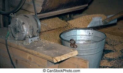 Machine sift grain and worker hands draw oat and pour into...