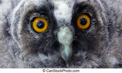 Huge mirror yellow eyes of the owl are looking into the distance, she is dying. Close up