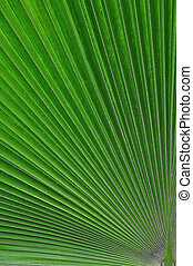 Sugar palm leaf texture pattern background