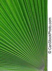 Sugar palm leaf texture pattern background
