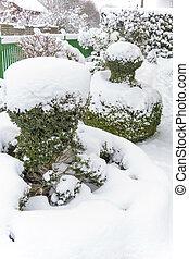 ornamental, árbol, nevoso