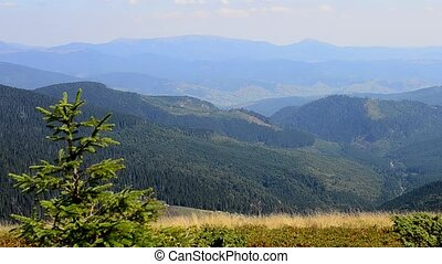 Beautiful landscape in mountains - Fir trees and grass on...
