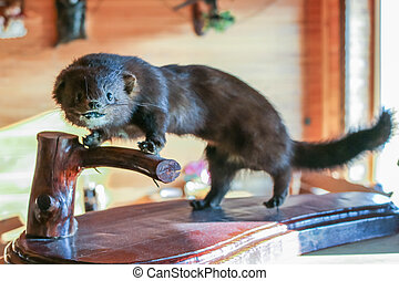 Marten scarecrow on a wooden stand close.