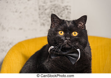 Black cat. Black Cat with Butterfly on the neck