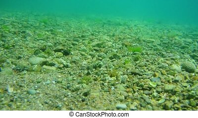 Sea bottom under water. Waters of the Adriatic, Montenegro. Text