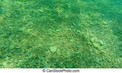 Sea bottom under water. Waters of the Adriatic, Montenegro.