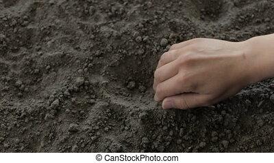 The farmer bury the beans in the ground - The farmer...