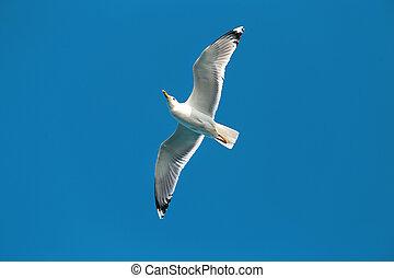 Photo of a beautiful gull