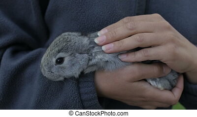 Gray fluffy rabbit in the hands of a girl - The girl gently...