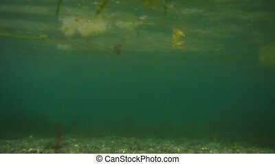 Sea bottom under water. Waters of the Adriatic, Montenegro....