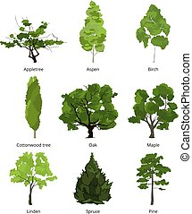 Vector set of green garden trees. Nature illustrations...