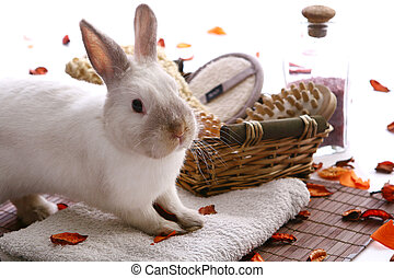 rabbit with spa products