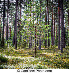 Ecology summer beautiful background. Wild forest panorama