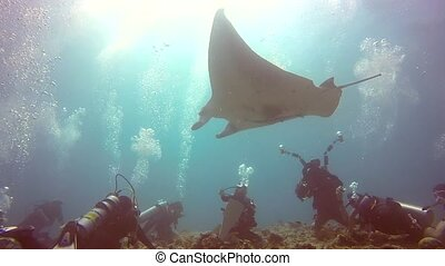 Manta ray and divers relax in sun underwater in ocean Maldives.