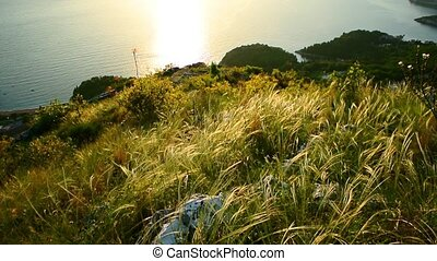 Spikelets in the field above the sea