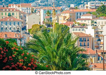 Cannes Architecture France. Cannes Palms and Flowers.
