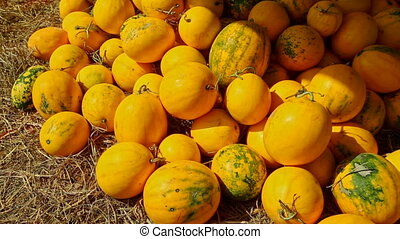 Ripe Yellow Melons in Pile on Street Market on Sunny Morning...