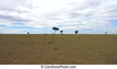 animals grazing in savanna at africa - animal, nature,...